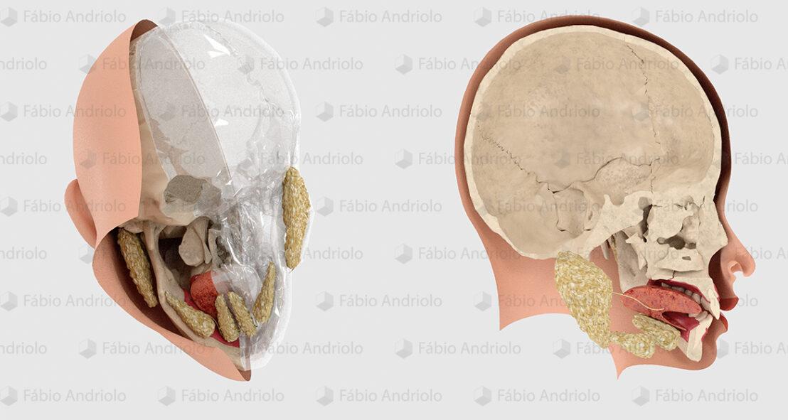 Fábio Andriolo - Ilustrações médicas 3D